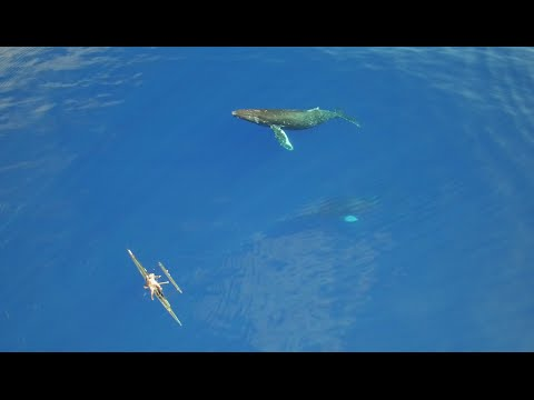 Video Of The Week | humpback whales in hawaii