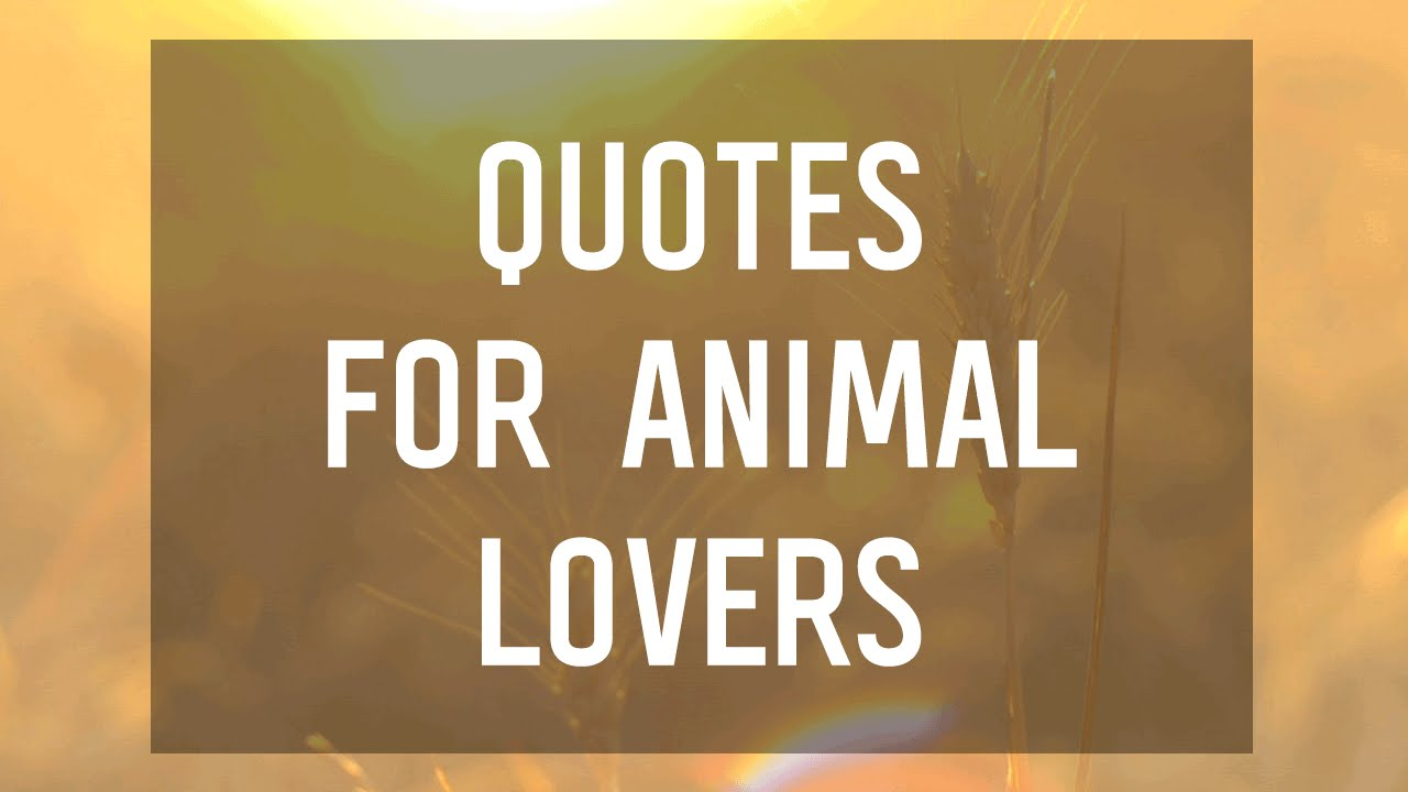 6 Quotes For Animal Lovers Youtube