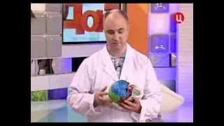 остеопат Евдокимов в передаче Доктор И