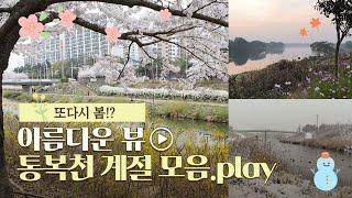 또다시 봄! 통복천 모아보기.play / 평택시 미디어…
