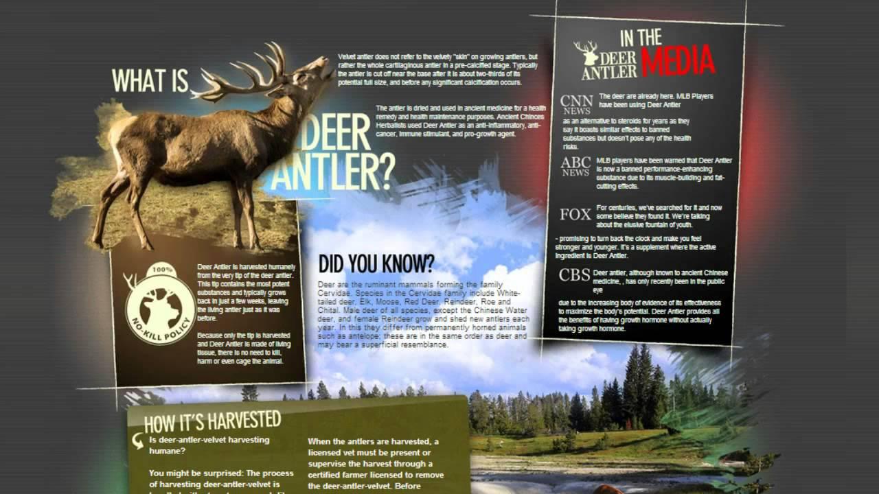 Deer Antler Spray Side Effects - YouTube