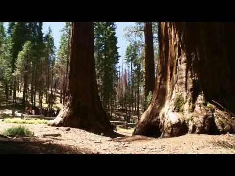 From parking lot to giant sequoia grove. Yosemite transformation finally complete