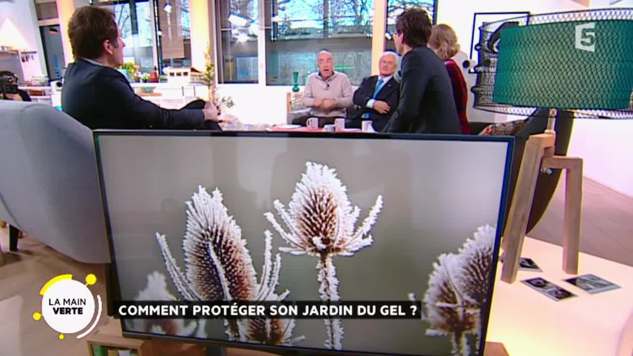 comment protéger son jardin du gel ? - youtube