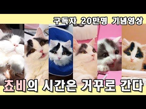 고양이의 시간은 거꾸로 간다 - 쵸비편. 구독자 20만명 기념영상