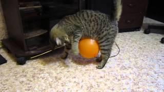 Кот и шарик
