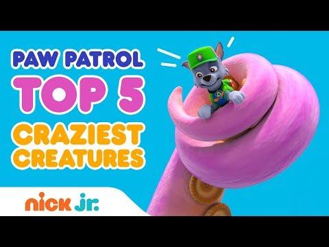 top-five-countdown-of-crazy-creatures-in-paw-patrol's-adventure-bay-|-paw-patrol-|-nick-jr.