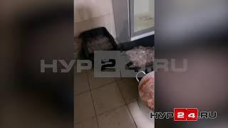 """В Новом Уренгое закрыли кафе """"Ситора"""" из-за антисанитарии"""