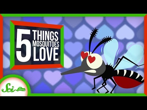 5 Things That Make You a Mosquito Magnet