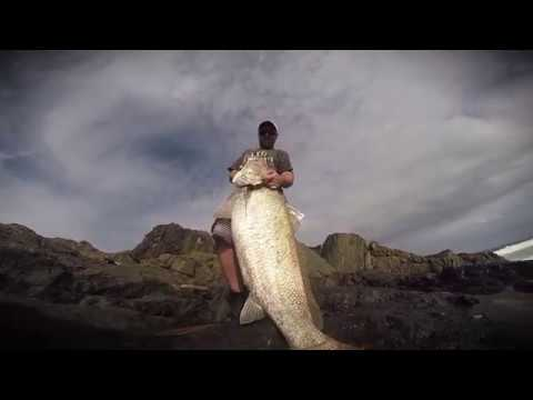 60lb (30kg) Jew Fish (mulloway) Caught From The Rocks On Hard Body Lure
