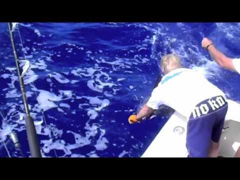 Maui's Marlin Fishing At Its Best