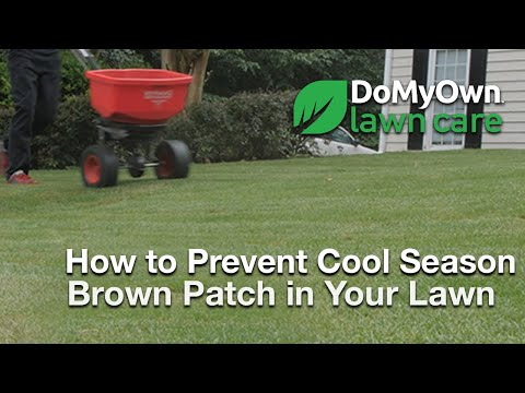 How to Prevent Brown Patch in Cool Season Grass Types - Lawn Care Tips |  DoMyOwn com