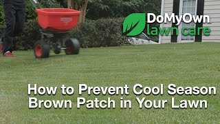 How to Prevent Brown Patch in Cool Season Grass Types - Lawn Care Tips