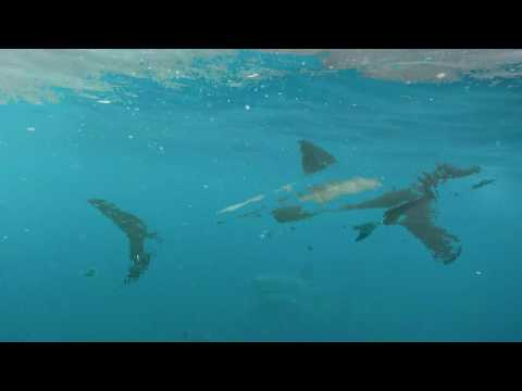 Shark Cage Diving with Marine Dynamics, South Africa