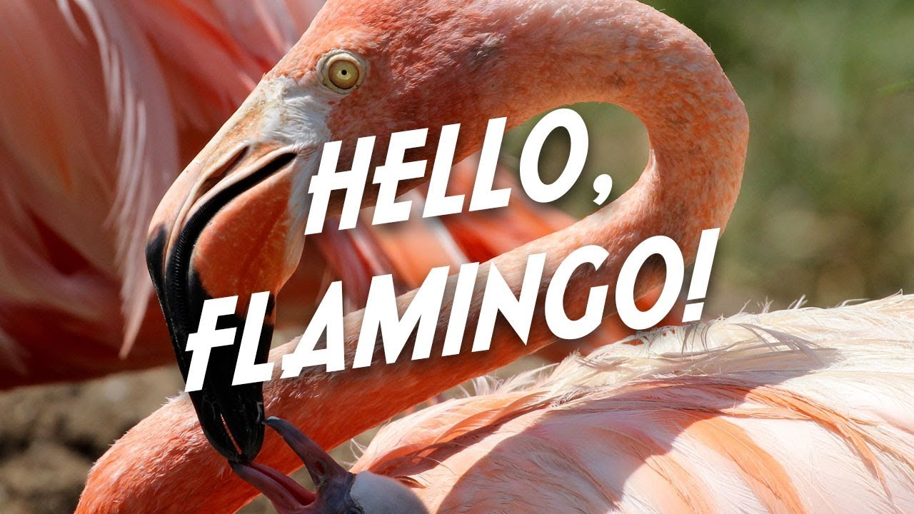 Pink Flamingo Day at the Tulsa Zoo YouTube
