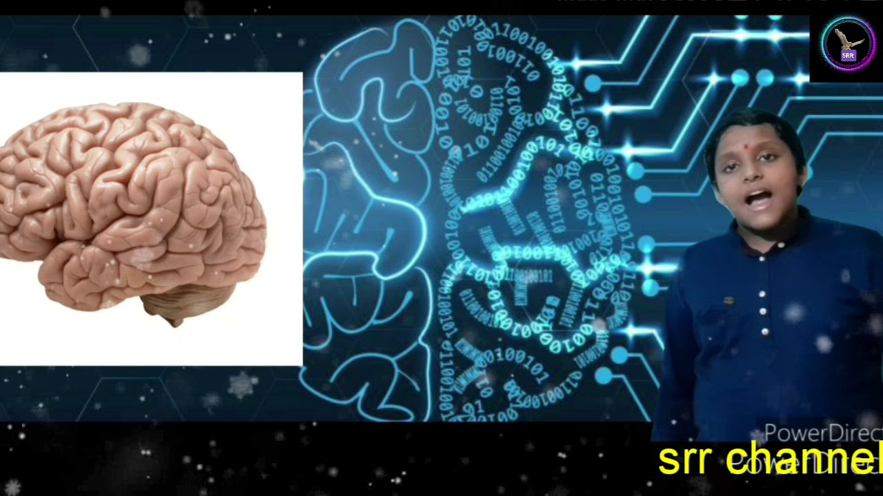 How our brain works in our human body and how many ...
