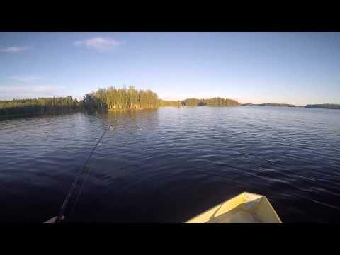 Saimaa järvistu 29.08.2015