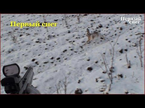 Охота на зайца ( Первый снег)