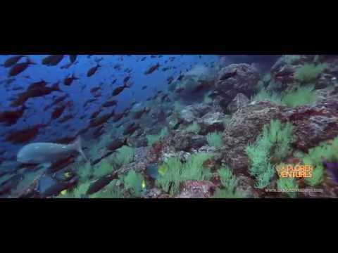 Galapagos April 2021