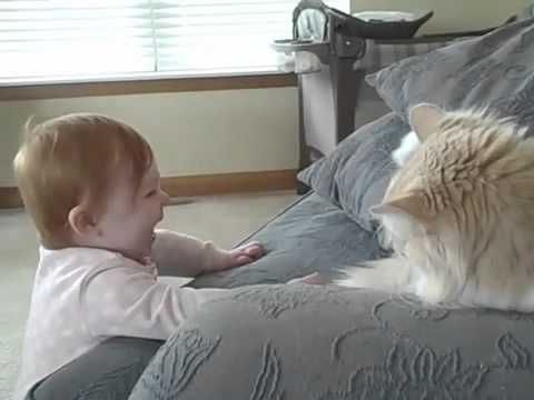 Baby and her cat boxing