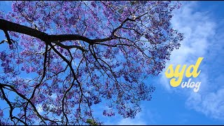 Sydney vlog. 집중 안될땐 동네 한바퀴