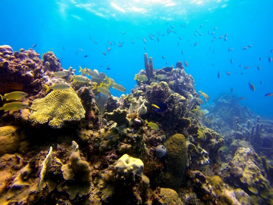 Catalina Island Dive Dominican Republic GoPro HD