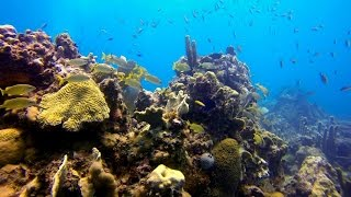 Catalina Island Dive Dominican Republic GoPro HD