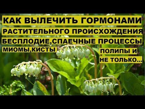 ЛЕЧЕНИЕ БОРОВОЙ МАТКОЙ БЕСПЛОДИЯ,полипов,кисты,миомы,спаечного процесса,эндометриоза