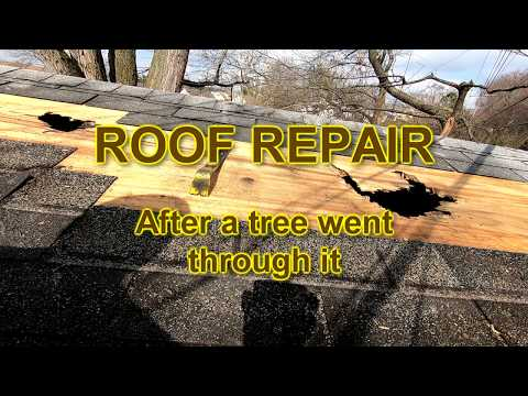 Reparing Roof after Tree Fell