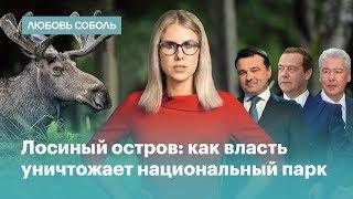 Медведев, Воробьев, Ротенберг и Собянин уничтожают Лосиный остров