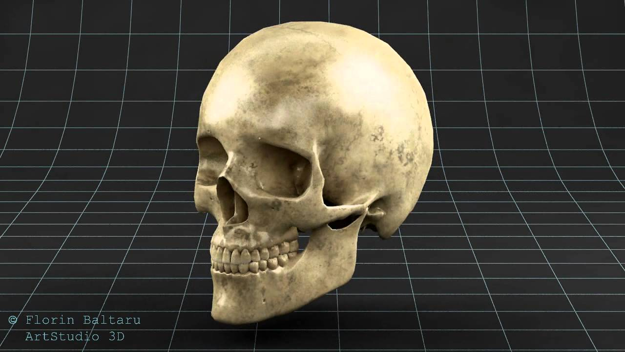 Anatomy - 3d Skull Skeleton - CGTRADER - YouTube