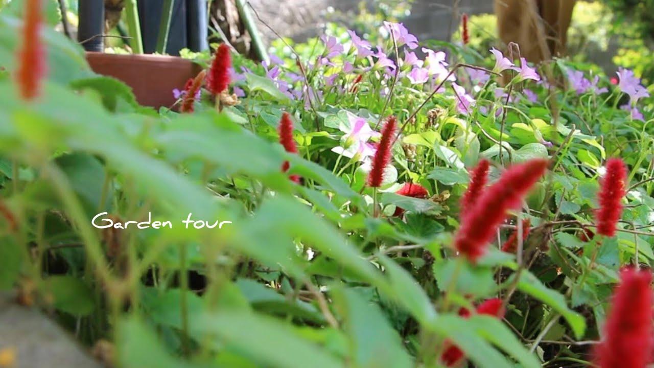 木漏れ日の春庭[vlog]Garden tour