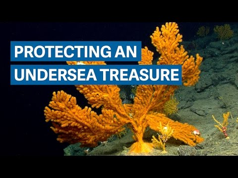 Making the 'Yellowstone of the Atlantic Ocean' an underwater national monument