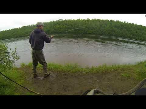 Dryfly Salmon from Neidenelva
