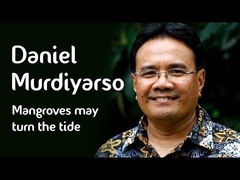 Daniel Murdiyarso - Mangroves may turn the tide