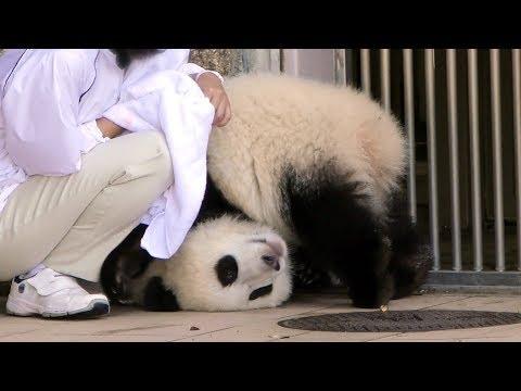【子パンダ】結浜🐼やっぱり甘えん坊っ♪【応援イベント後…】Giant Panda -Yuihin-☆wheedling child❤
