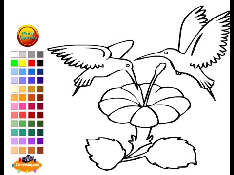Hummingbird Coloring Pages For Kids - Hummingbird Coloring Pages ...