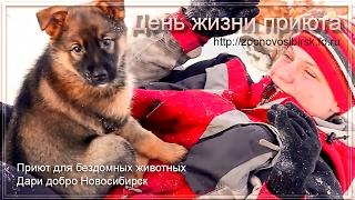 Узнай как живут собаки в приюте Дари добро Новосибирск | Learn how the dogs live at the shelter