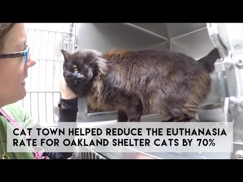 Join Team Cat Town to Save Oakland's Shelter Cats!