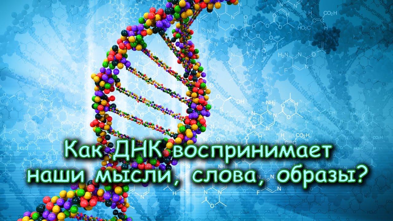 Как ДНК воспринимает наши МЫСЛИ, СЛОВА, ОБРАЗЫ?