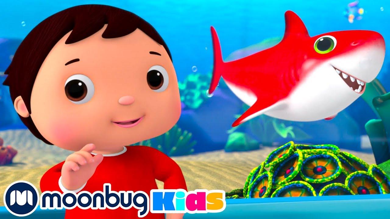Color Baby Shark Songs |  Nursery Rhymes & Kids Songs - SHARK WEEK | Little Baby Bum Songs
