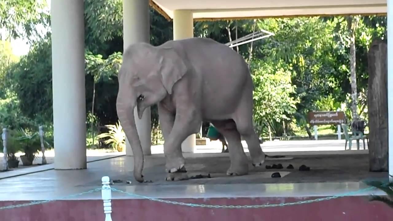 Myanmar Trip Myanmar White Elephants  Doovi-5803