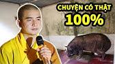 Chuyện có thật 100% về con HEO tại Chùa Thanh Hòa (Bình Phước)