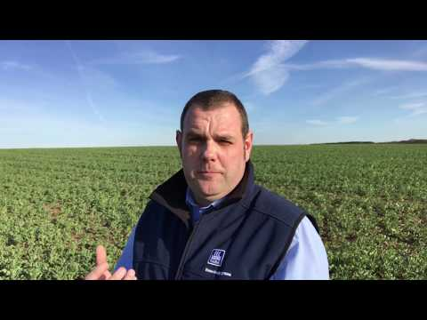 How To Take A Leaf Tissue Sample For Nutrient Analysis