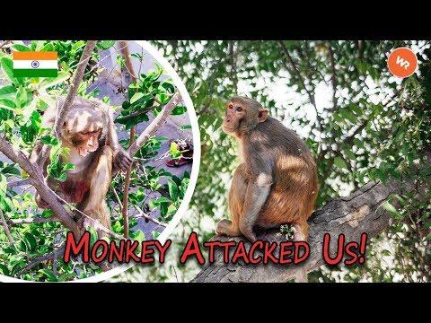 Monkey Attacks Us On The World Race!