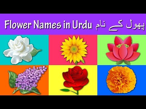 Learn Flower Names In Urdu And English | پھول کے نام | Rhymes Collection For Kids
