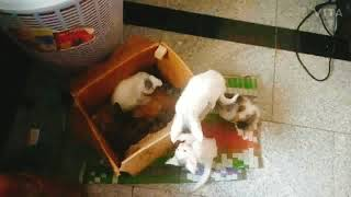 Cat's Paradise | White cat,  Breed  Turkish Angora