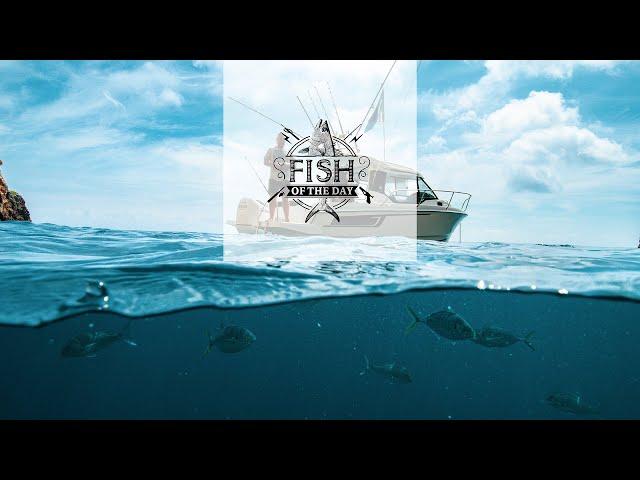 Fish of the Day I Saison 4. Épisode 4 - Voyage vers un lieu insolite