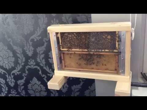 WindowBee mini observation bee hive.