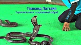 Тайланд Паттайя  Змеиная ферма Страшный номер  с королевской коброй
