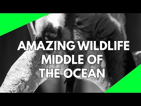 Wildlife Documentary: The wildlife on the British Virgin Islands in the middle of the Atlantic Ocean